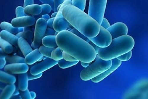 Legionella bacteria can cause serious lung infections