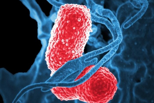 Klensiella pneumoniae is a common type of bacteria which can cause serious infections
